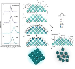 Bipolar-shell resurfacing for blue LEDs based on strongly confined perovskite quantum dots 《Nature Nanotechnology》